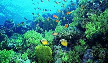 门店活动策划|花椒旅行卡-无限魅力珊瑚岛